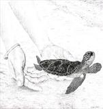Turtles on the beach by Michelle Graham, Drawing, Pen on Paper